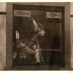 vetrina storica della salumeria Bonicelli con una mucca gonfiabile